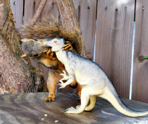 Squirrel Makes out With T-Rex, Dino-Kiss